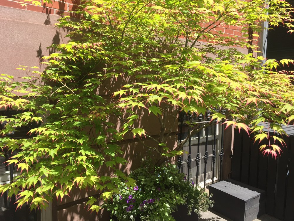 Carroll Gardens Entrance Planting
