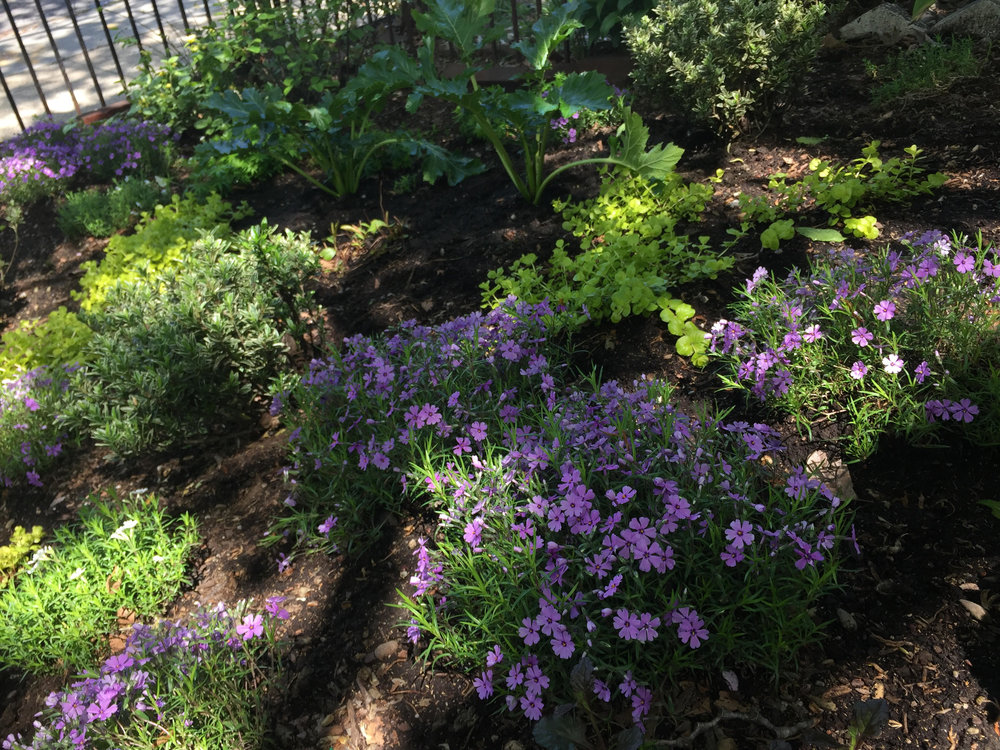 Williamsburg Shady Perennial Garden Design