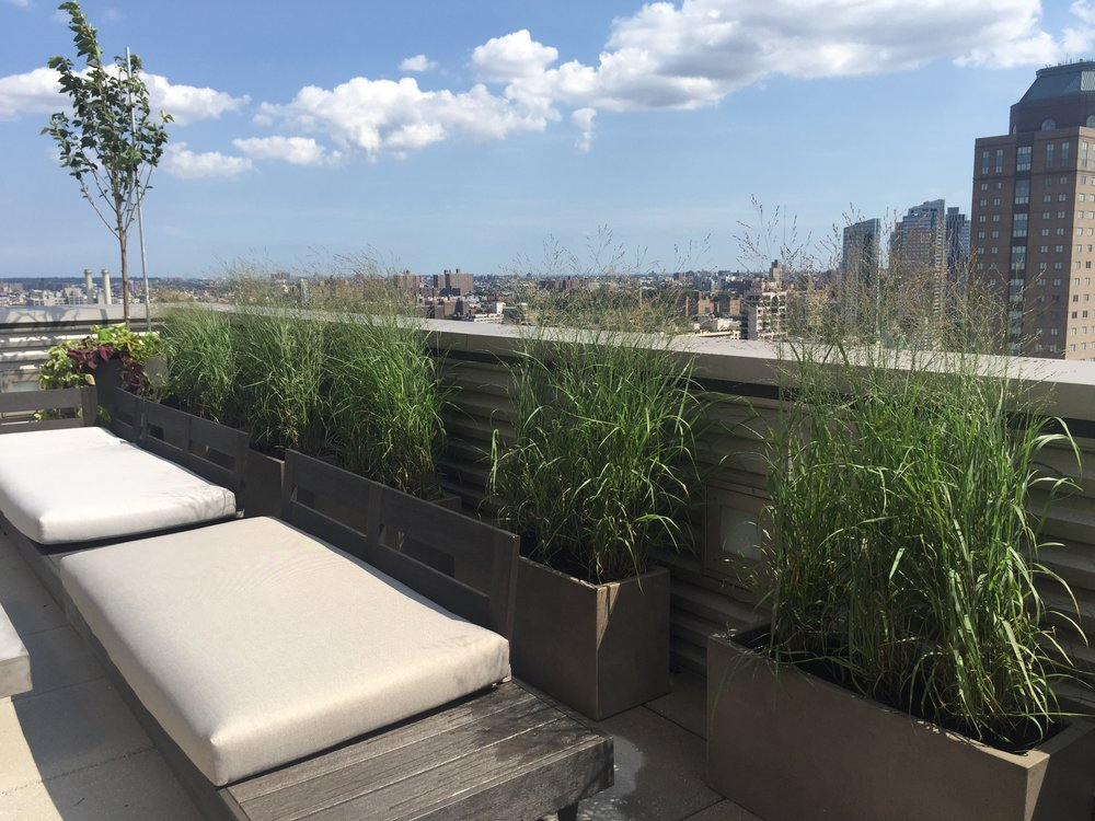 Native Grasses overlooking Lower Manhattan in Dumbo