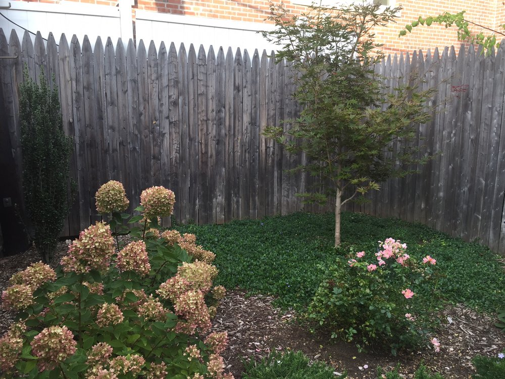 Windsor Terrace Small Backyard Garden Design