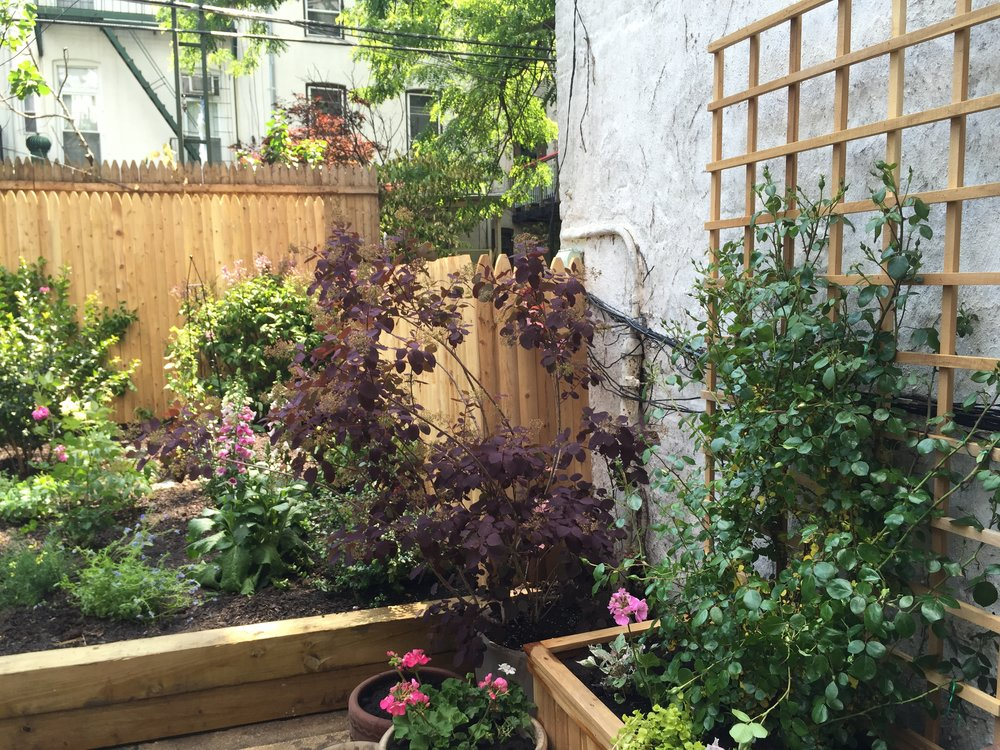 Park Slope Backyard Transformation - New Planting