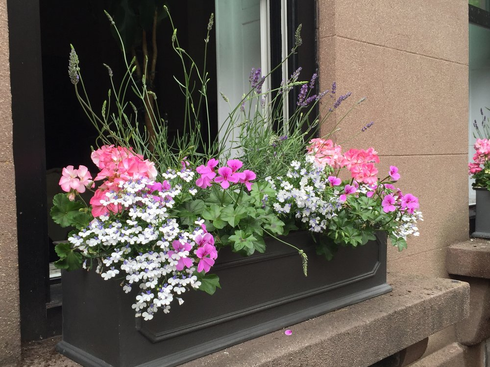 Carroll Gardens Summer Window Boxes
