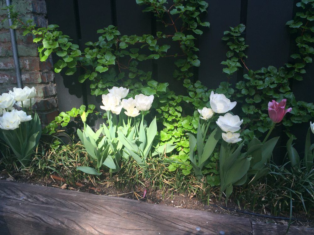 West Village Backyard Spring Bulbs