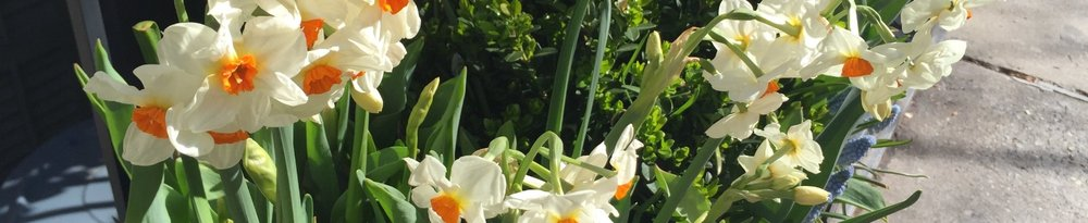 Pretty Narcissus Shot.JPG