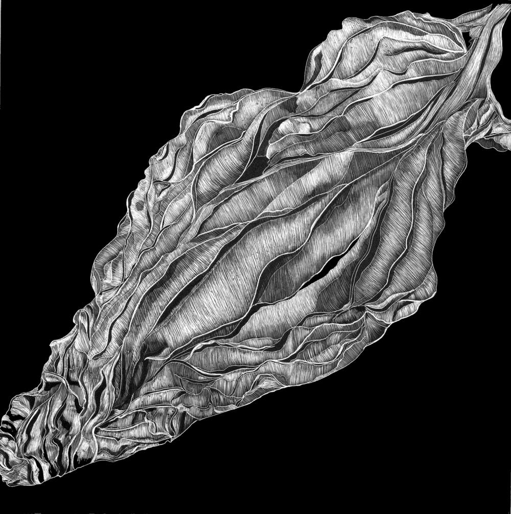 Artichoke Leaf