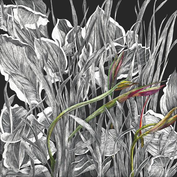 Small Evolution of an Iris