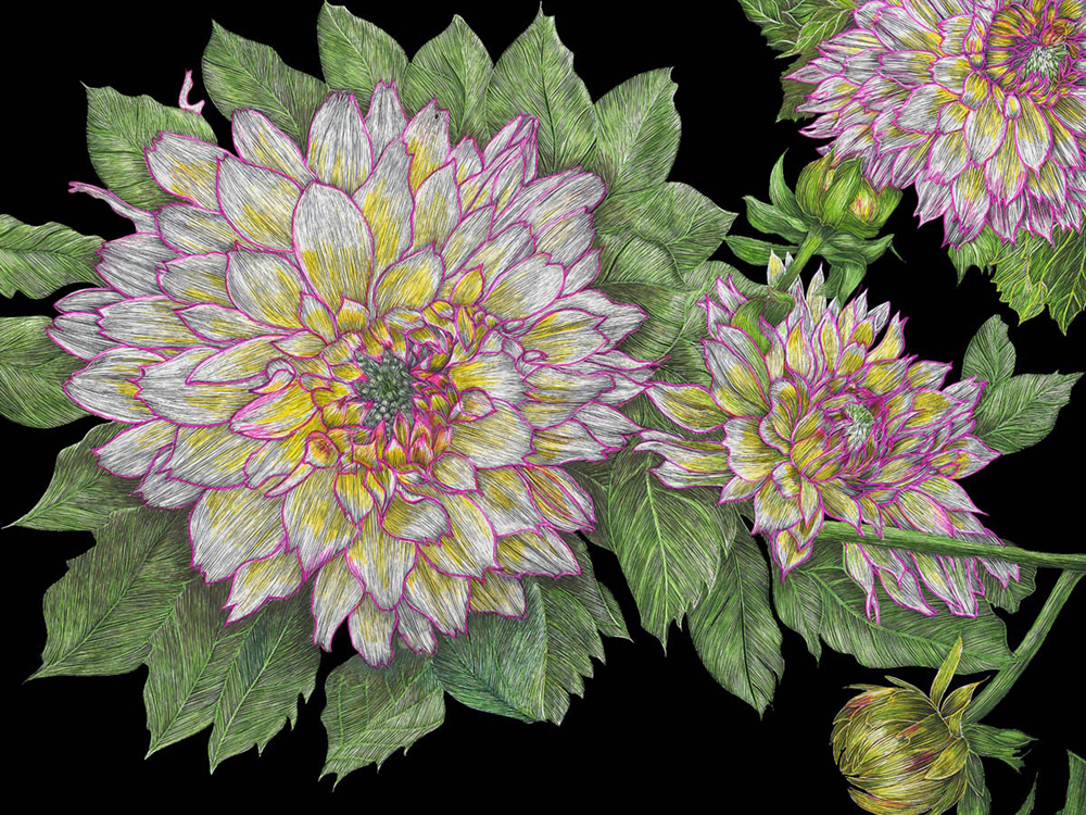 copyright: Dahlias by Lisa Goesling