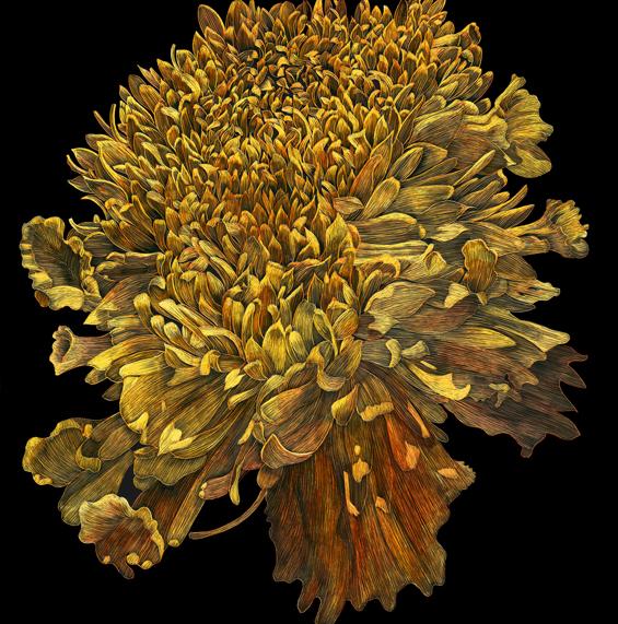 Marigold by Lisa Goesling