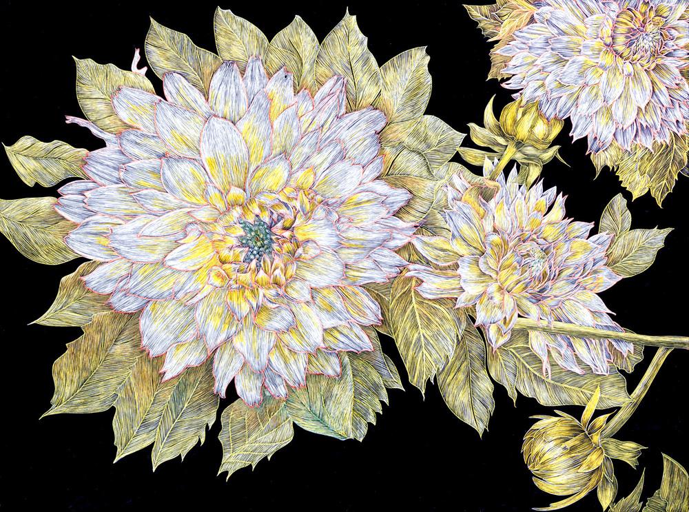 Dahlias by Lisa Goesling