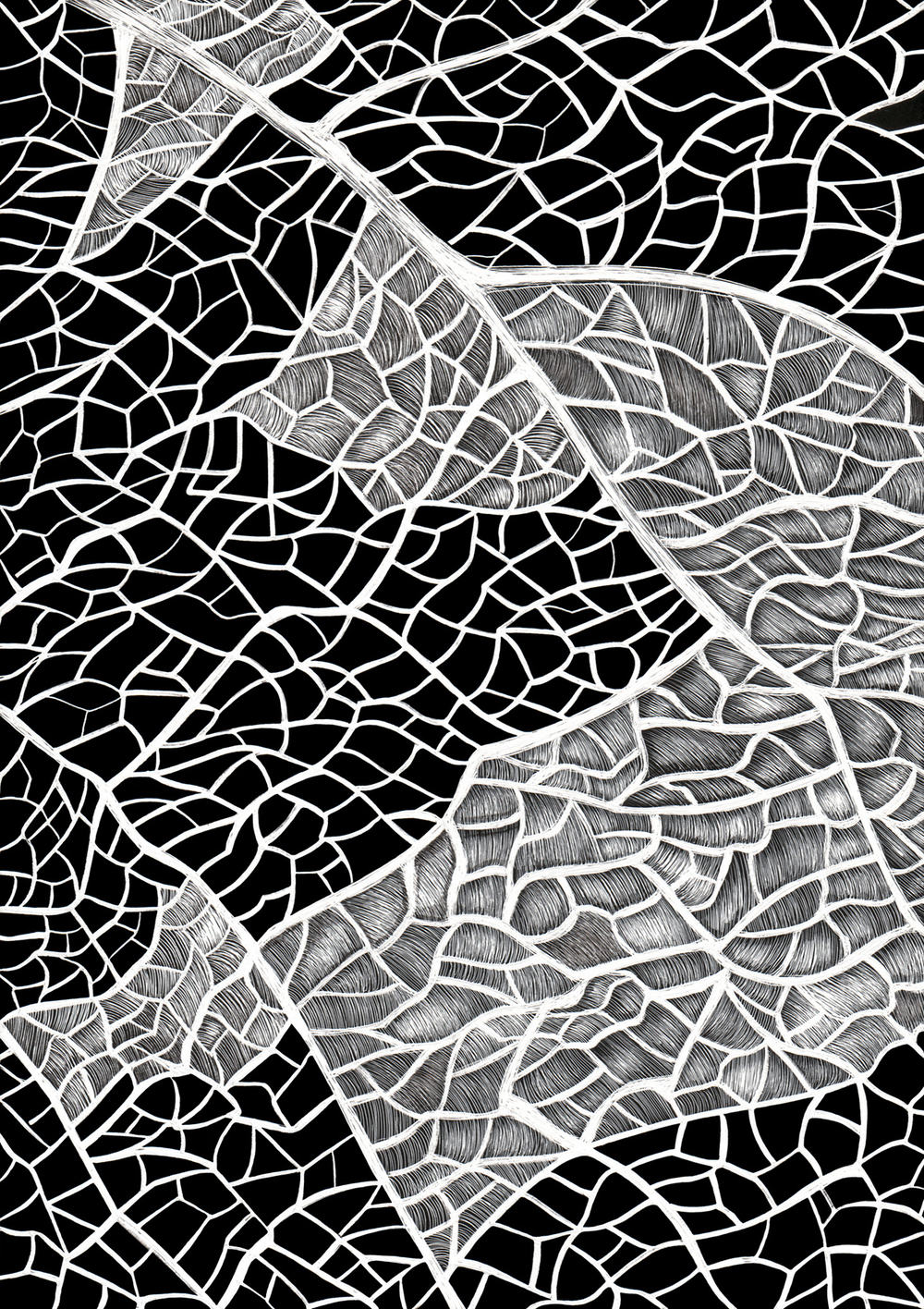 Detail of a Grape Leaf by Lisa Goesling