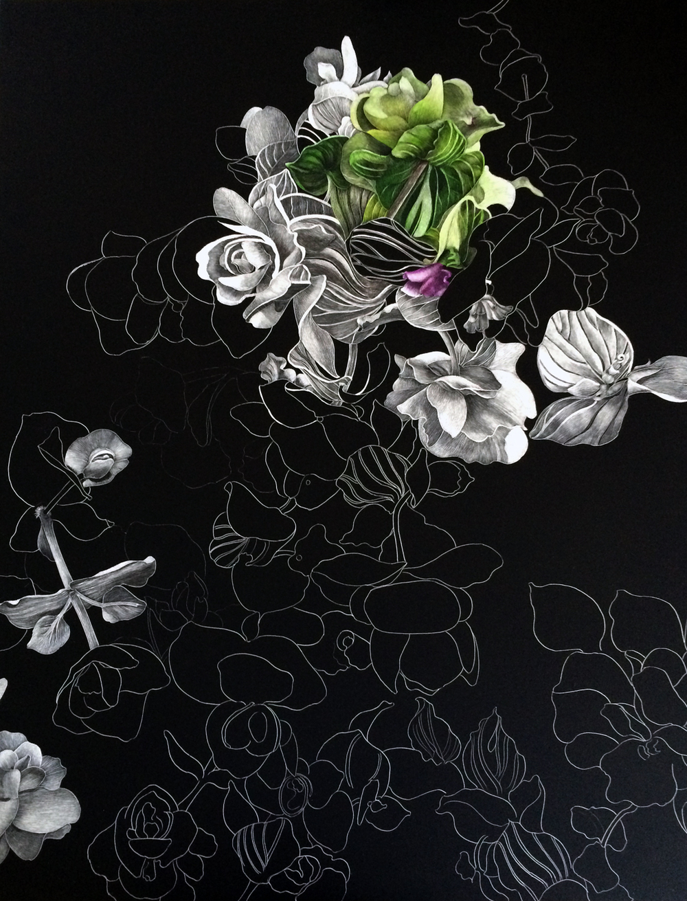 Oregano by Lisa Goesling