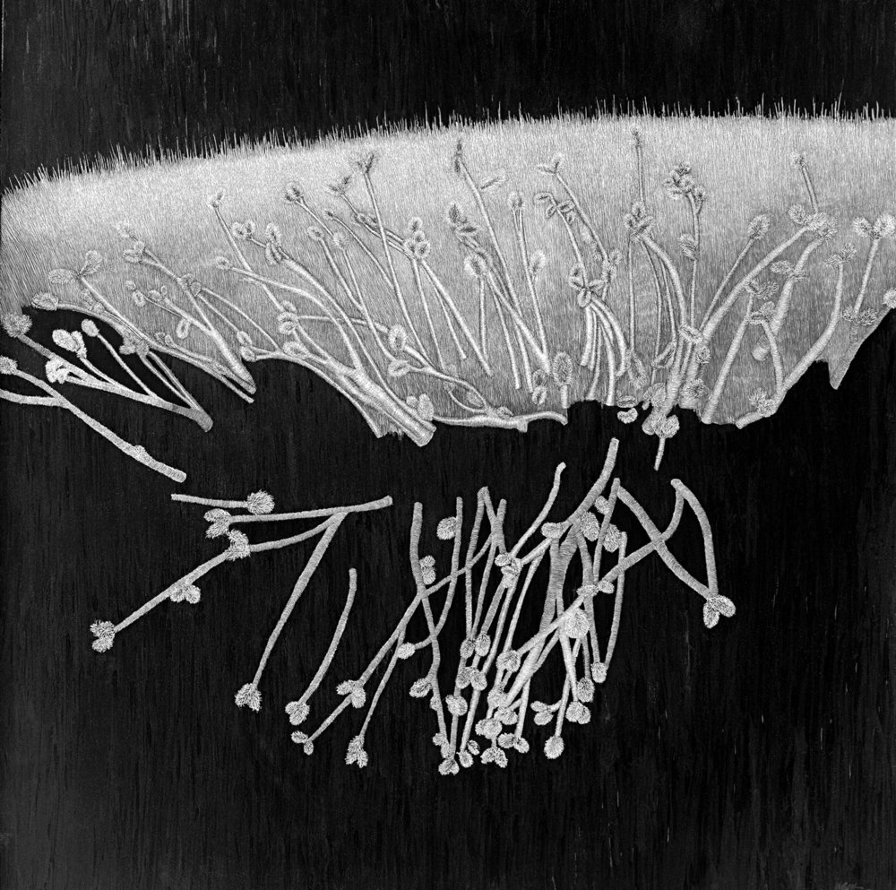 "Catkin Study by Lisa Goesling 23 3/4"" x 23 3/4"" 2013"