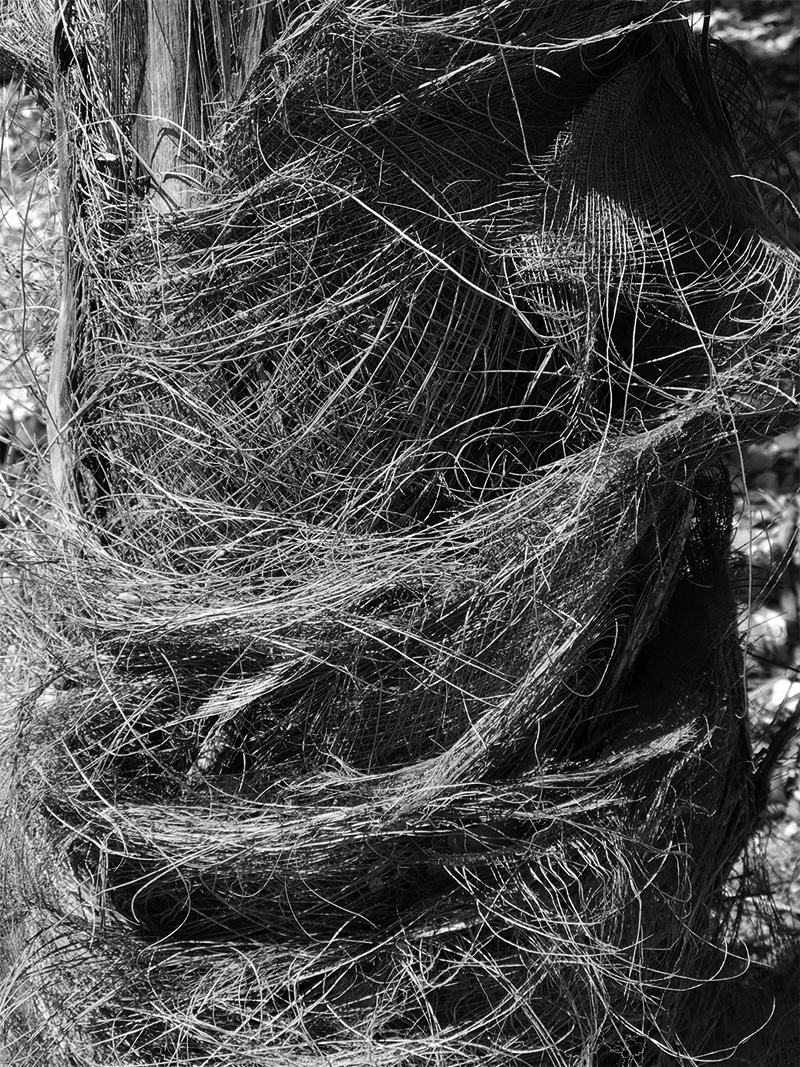 'Hairy' tree.