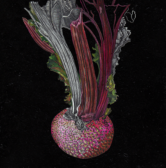 Beet in Soil by Lisa Goesling