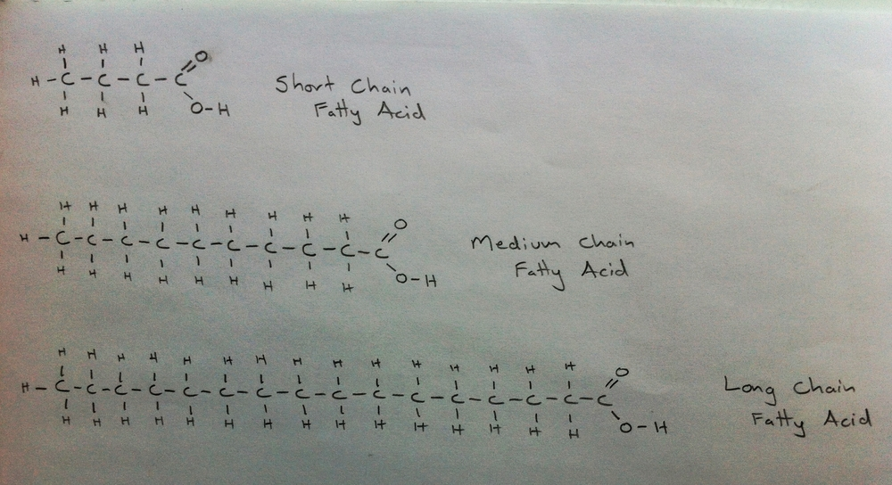 Fatty Acids: Short, medium and long chain