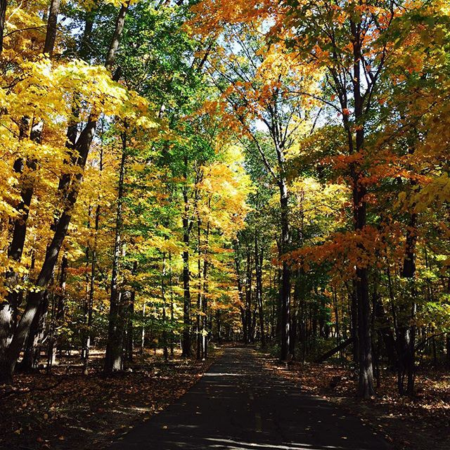 Walking in nature and counting my blessings. #dublinlife #nature #blessed #falltime