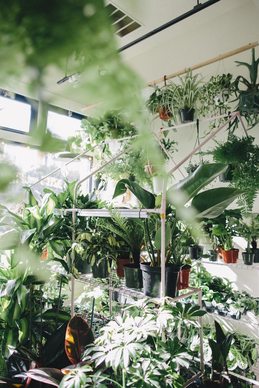 PlantsandFriends2018-97.JPG