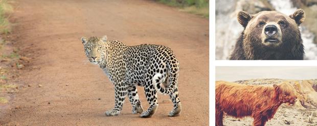 Wild-Animals.jpg