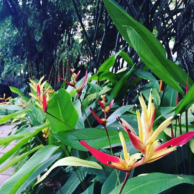 Morning🌱  #goodmorning #morning #mood #throwbackthursday #travel #travelgram #traveldiaries #wanderlust #beautiful #botanical #india #bangalore #namaste #instadaily #photooftheday #instagood #floweroftheday #blooms #florals #flowermagic #instablooms