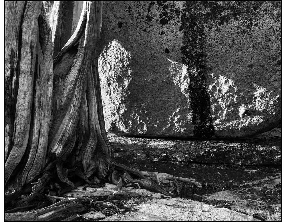 Juniper-Tree-and-Rock.jpg