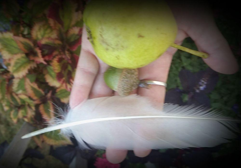 goose pear acorn pic.jpg