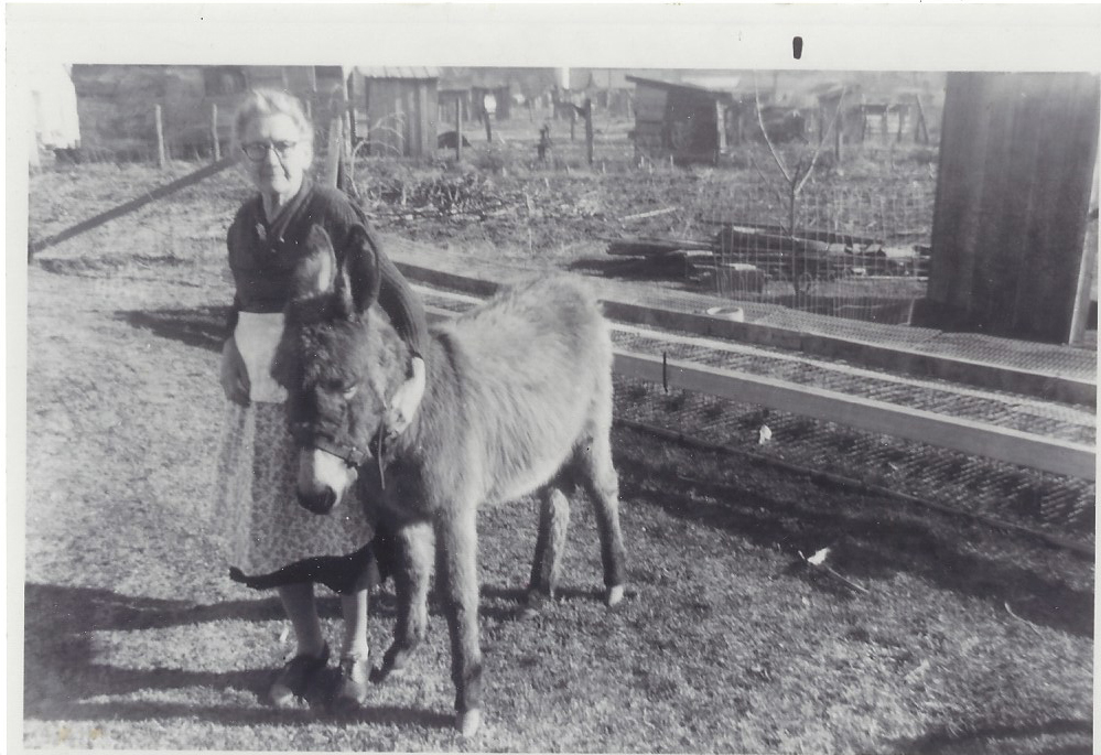 great grandma penley and donkey companion