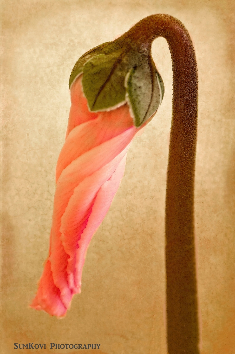 pink twisted bud.jpg