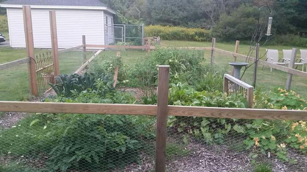 xmas blooming garden.jpg