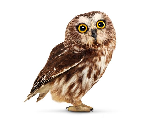 Telus Owl