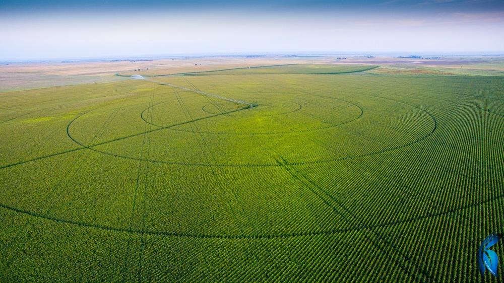 Drone Shot, Crop Circle