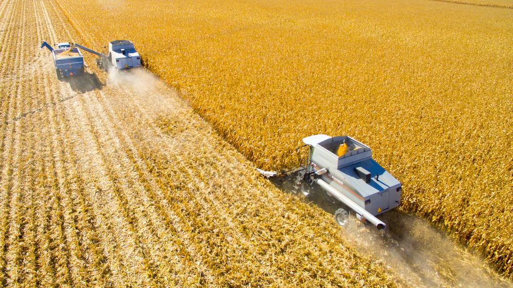 Corn Harvest 2015