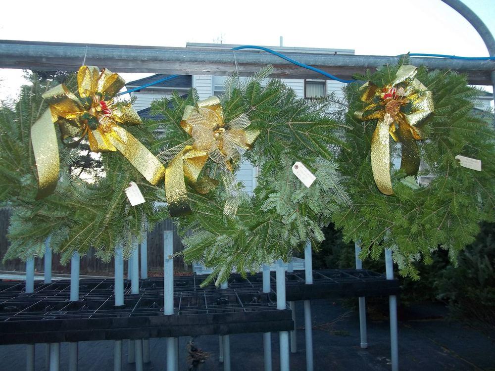 hanging wreaths.jpg