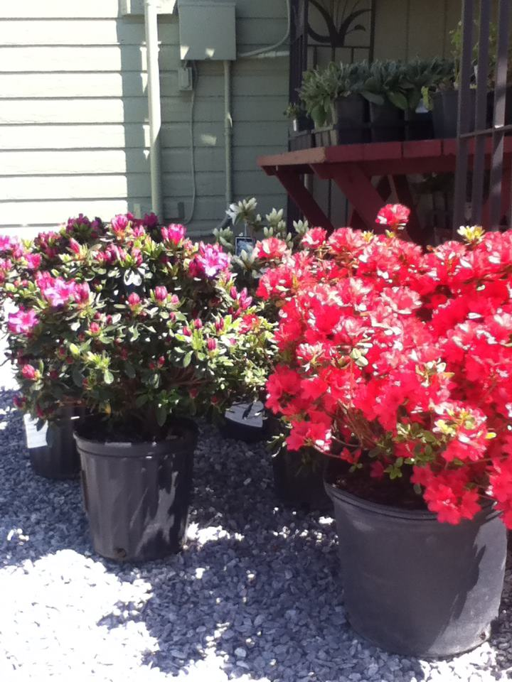 big floor pots and flowers.jpg