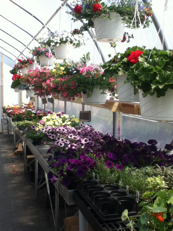 inside greenhouse.jpg