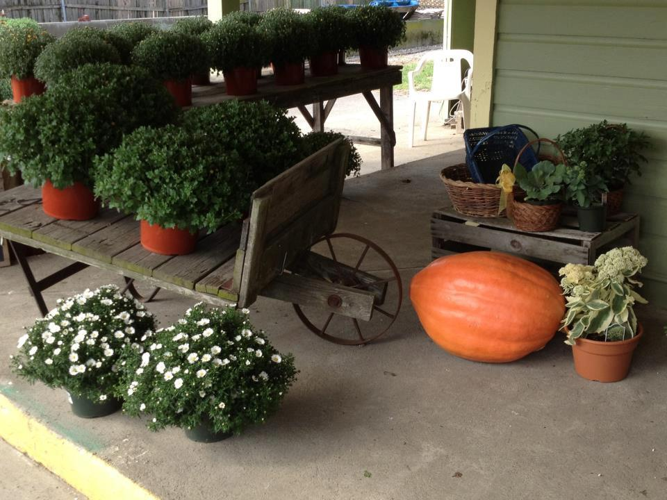 flowers wagon pumpkin.jpg