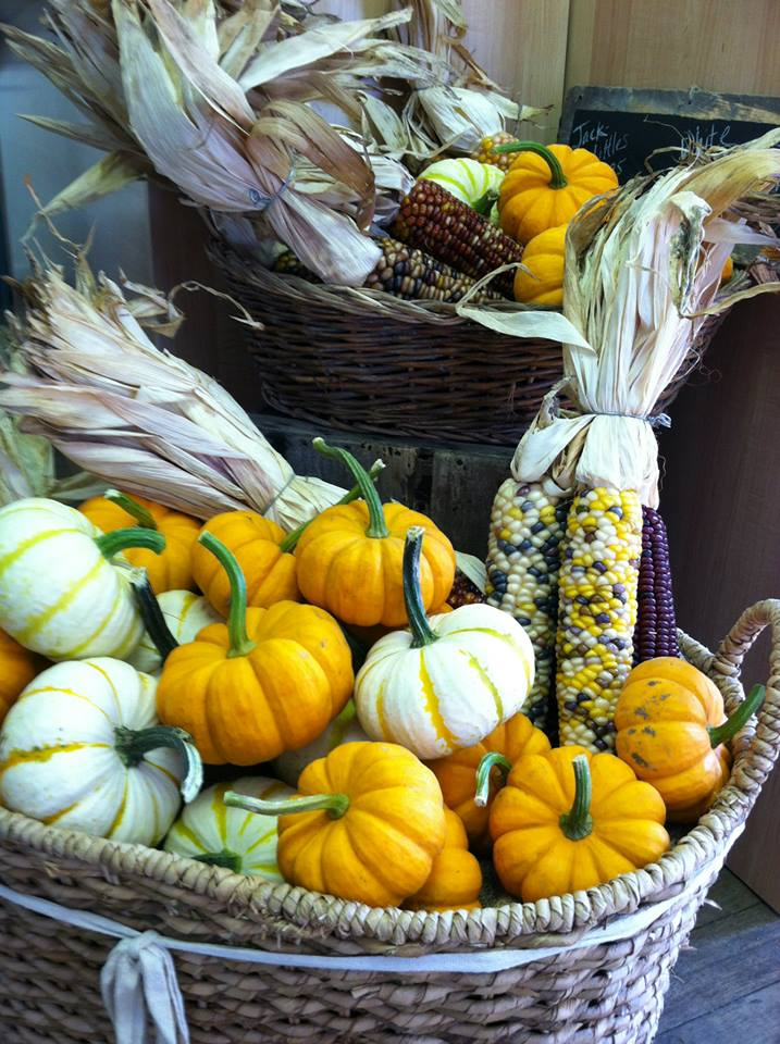 pumpkins indian corn.jpg