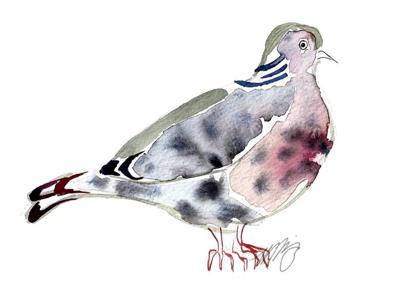 Central Park Pigeon