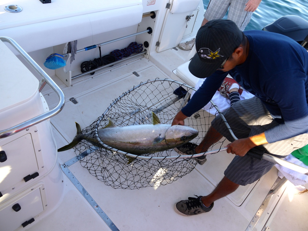 Jeff's 40 pound Yellowtail
