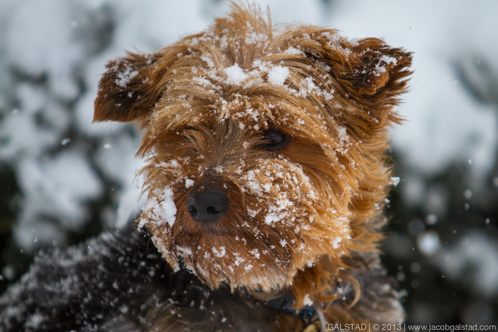 Charlie in the snow.jpg