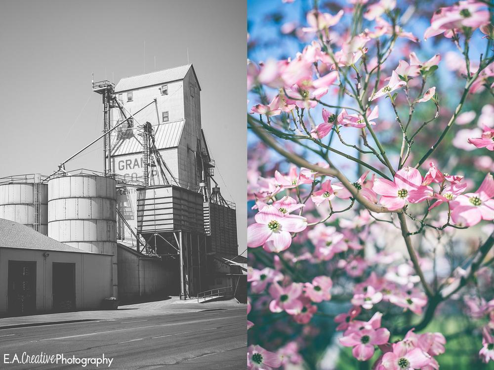 Old Mill | Flower Tree
