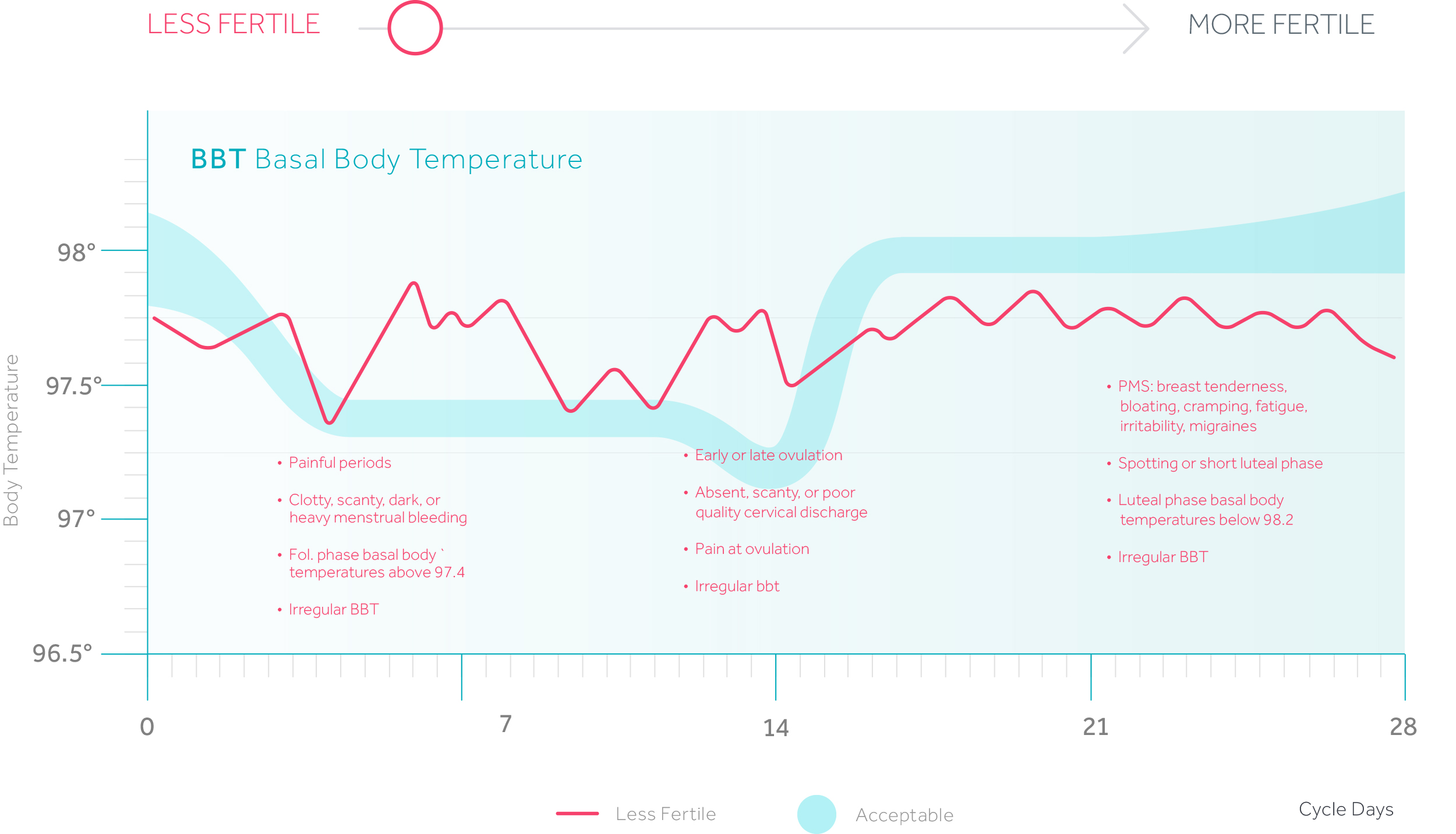 Why the basal temperature changes