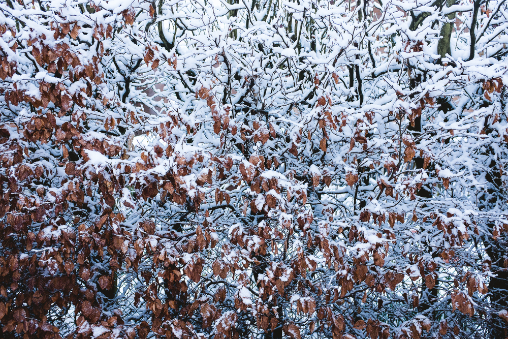 Staffordshire Winter Photography with Snow 2