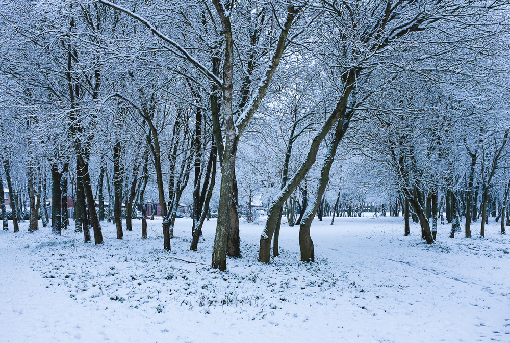 Staffordshire Winter Photography with Snow 3