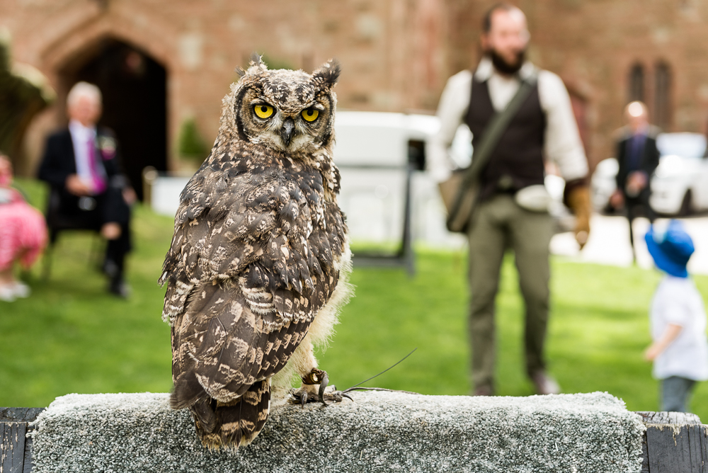 Castle Wedding at Peckforton Castle, Cheshire Owl Falconry Ian Stuart Bride Bandeoke - Jenny Harper Photography-52.jpg