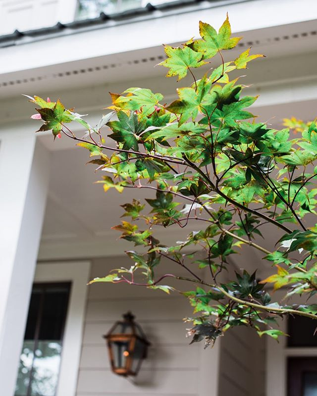 Saved the japanese maple . . . #takethatmrarborist #atlanta #trees #japanesemaple #homebuilding #builder #porch #farmhouse #modernfarmhouse #homedesign #jwhallbuild #underwoodhills #westside #upperwestside #westmidtown
