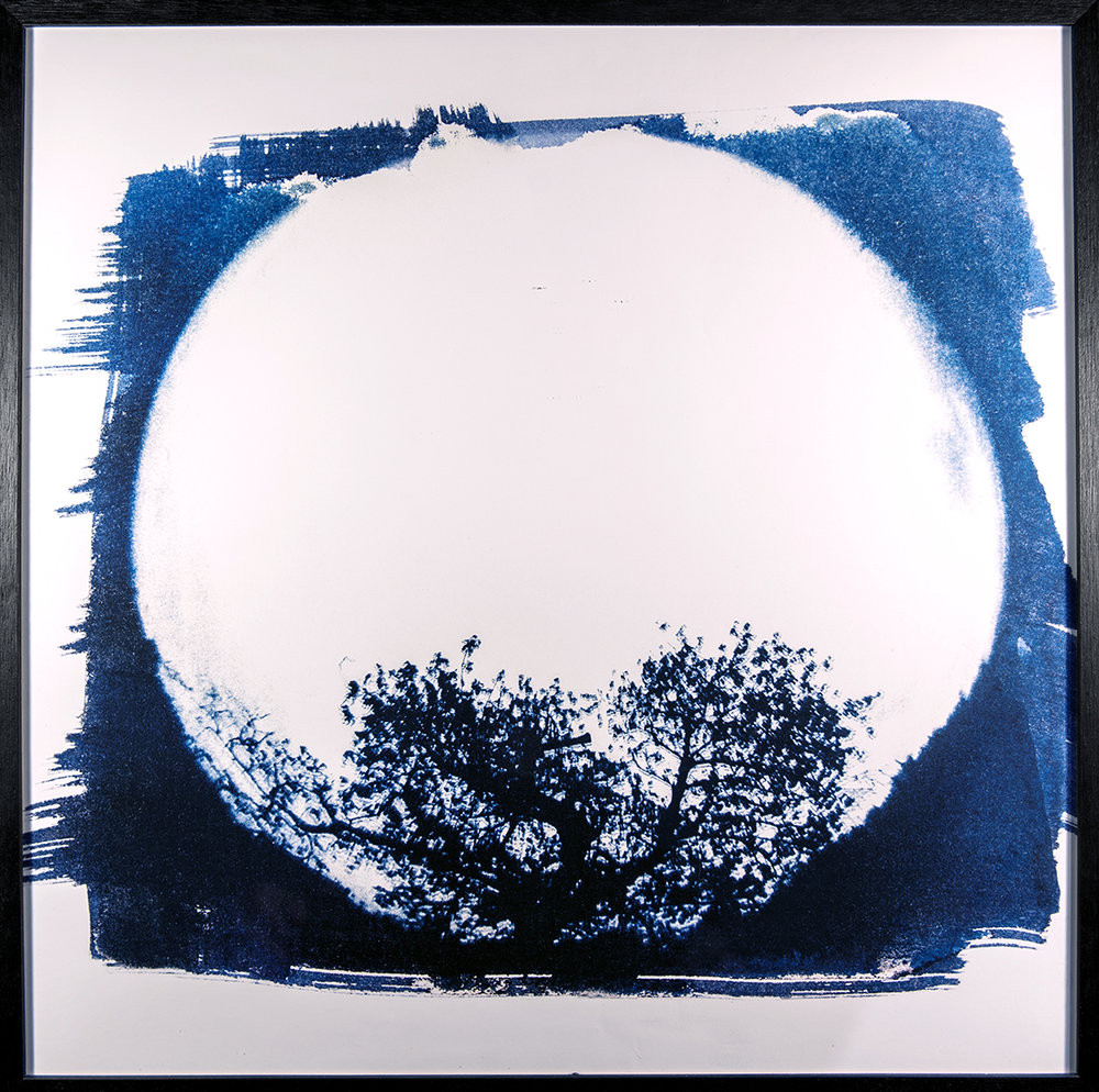 - TREEPrint from original cyanotype, in 62x62cm frameEd. 3/20500 €