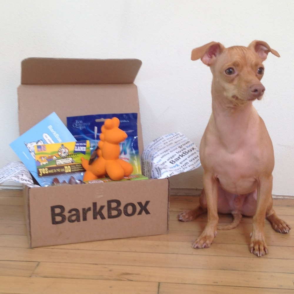 Raise Money with every Barkbox!