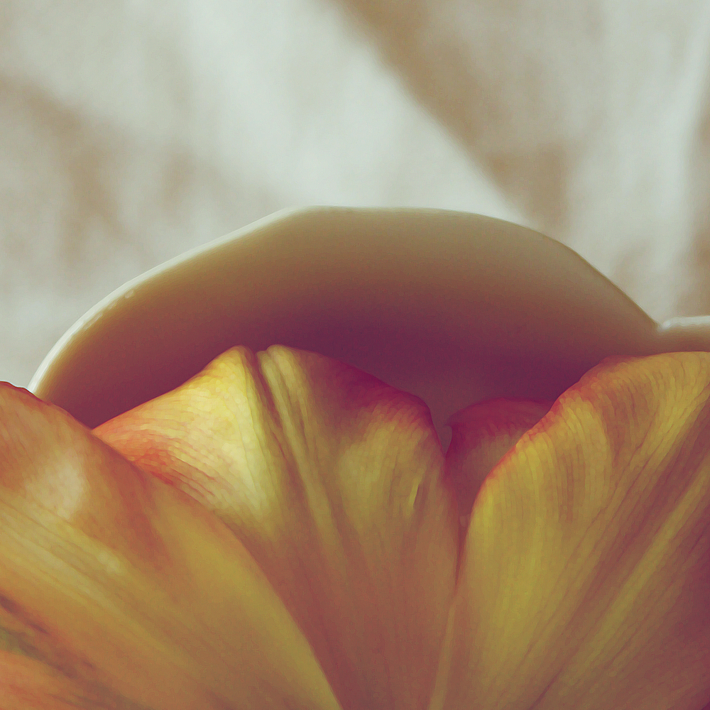 tulip in bowl.jpg