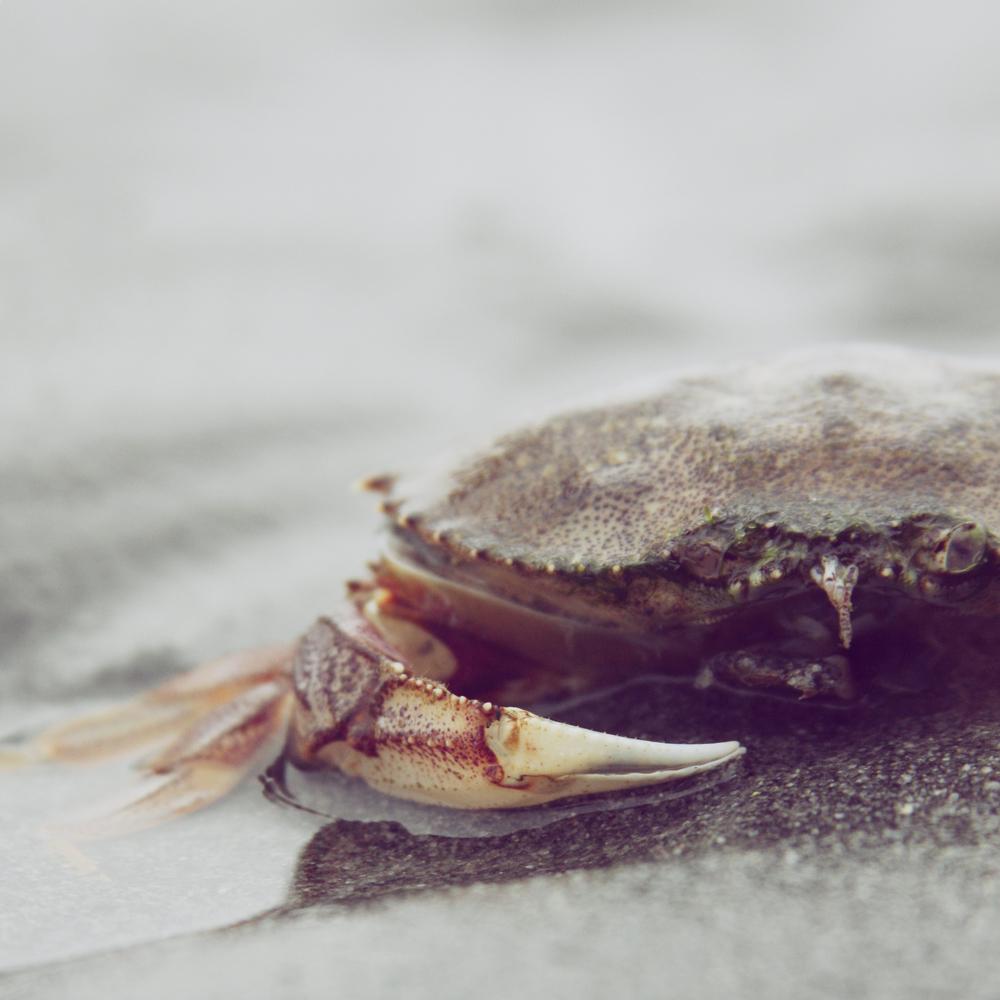 craby 2.jpg