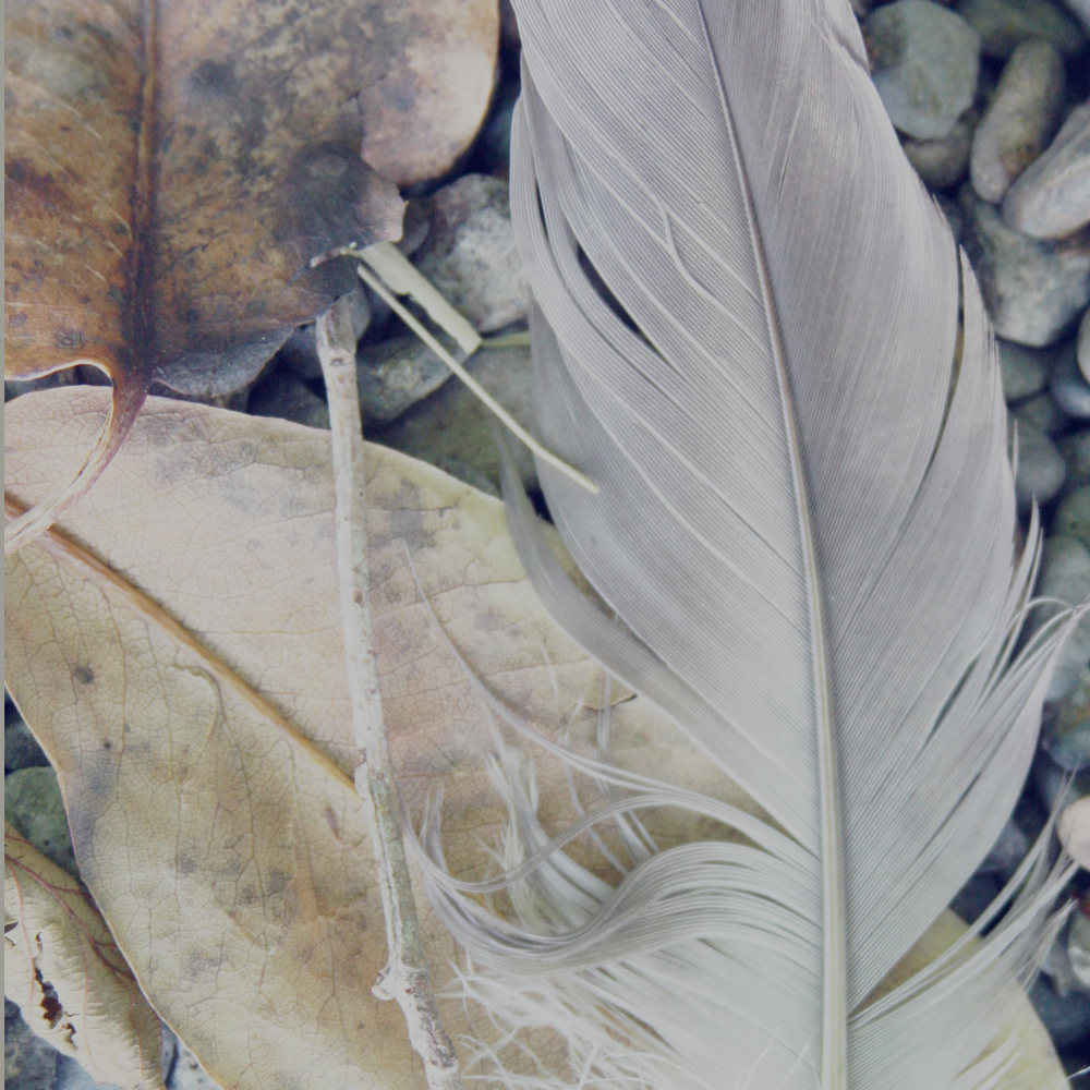 feather and two leaves.jpg